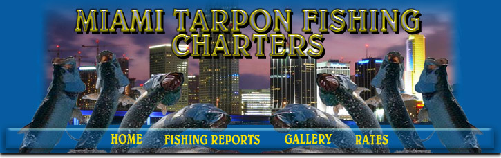 fishing charters, tarpon, tarpon fishing